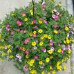 "16"" Coco Hanging Basket with PW Mix"